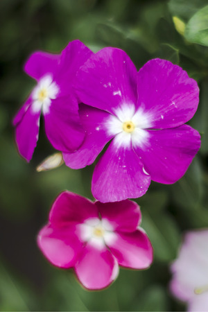 close up purple pink violet flowers photo