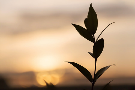 Blurred background: tree leafs at sunset atmosphere. Concept of lonely/peaceful/unhappy.