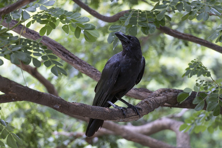 The crow is on a branch on a beautiful natural blurred background.