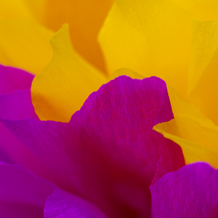 Wonderful pink and yellow abstract background. small depth of field . used as background. color in nature. macro