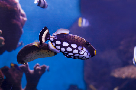 tropical marine fish swimming around in coral reef Stock Photo - 1641083