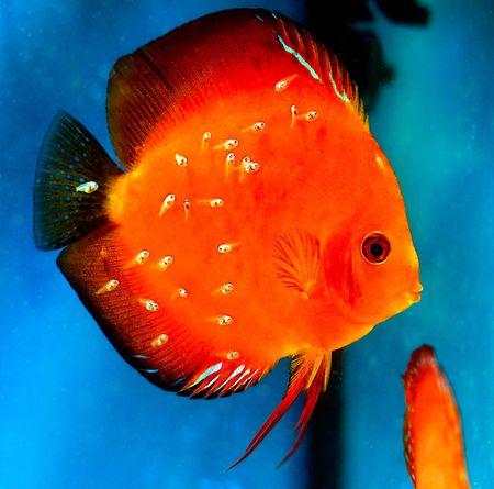 diskus: colorful  Stock Photo
