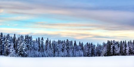 motionless: winter scenery in the north of Sweden Stock Photo