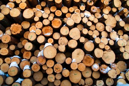 a pile of pine timber waiting for transport photo