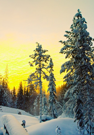sweden winter: a winter scenery in the north of sweden