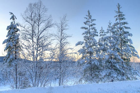 a cold forest scenery in the north of sweden photo