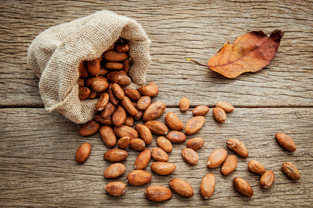 cocoa bean: Cocoa bean in hemp sack on the wooden background