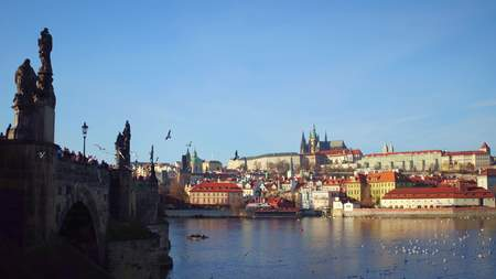 Charles bridge, flying gulls, floating swans and distant Prague castle on a sunny day, Czech Republic