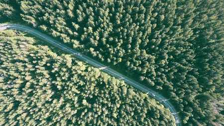 tatra: Aerial top down view of a fir tree forest and the car road Stock Photo
