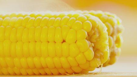 Steaming hot freshly boiled corncobs close-up shot