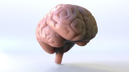 Human brain model, 3D rendering