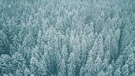 Aerial view of snow covered trees in winter