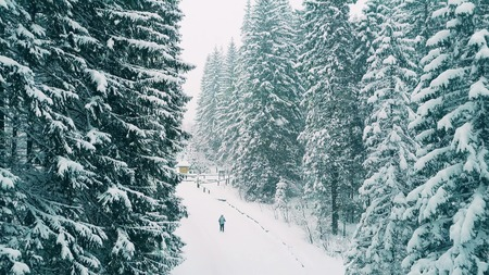 Aerial Shot Of A Person Hiking In Forest The Snow Stock Photo