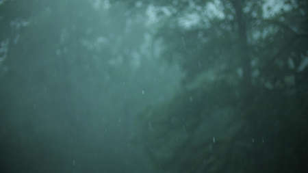 Heavy rain and wind in the forest