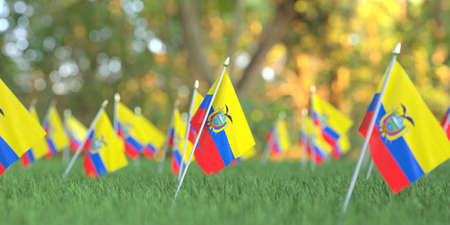 Small flags of Ecuador in the grass. National holiday related 3D rendering Banco de Imagens
