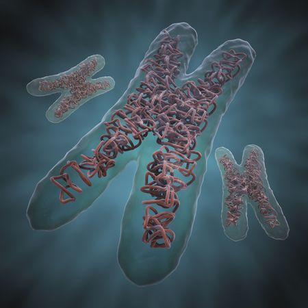 Chromosome X photo