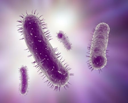 bacterias: Ilustración científica de un grupo de bacterias Foto de archivo