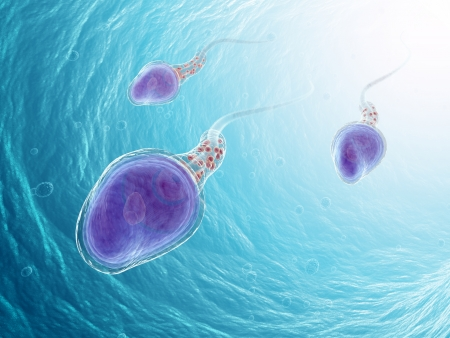 Three sperm cells swimming in the search of an egg Stock Photo