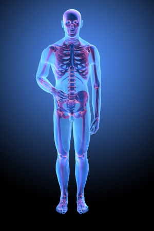 Human anatomy with visible skelton - medical illustration Stock Photo