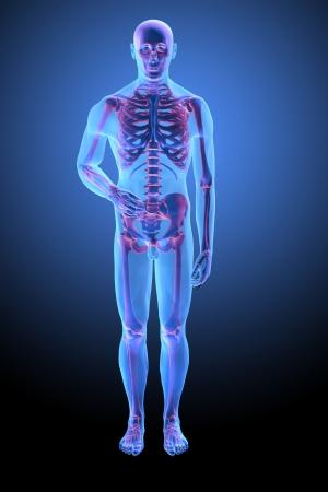 Human anatomy with visible skelton - medical illustration Stok Fotoğraf