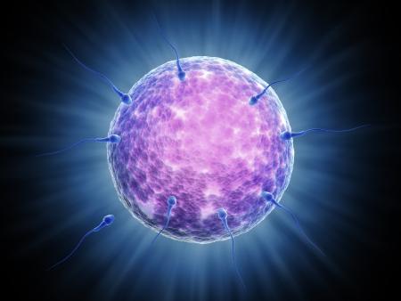 Sperm cells reaching their goal - the female  sperm egg