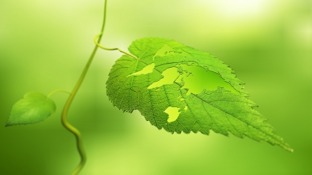 the natural world: Close up view of a leaf with the world map cut out - ecology concept
