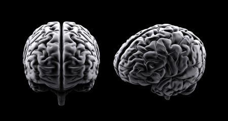 Two stylized views of a human brain