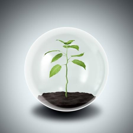esfera de cristal: Concepto de conservaci�n del medio ambiente - planta en una esfera de cristal Foto de archivo