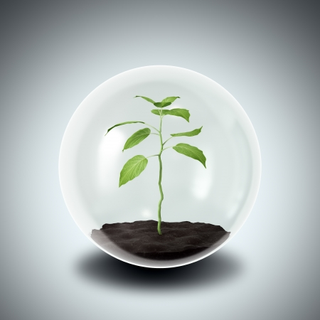 Environmental conservation concept - plant in a glass sphere photo