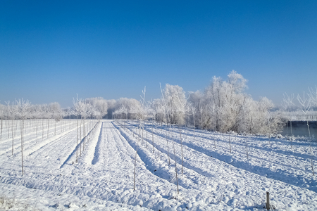 agricultural area: plain Mantua, Italy - December 8, 2012  Pictures of the agricultural area during the winter Stock Photo
