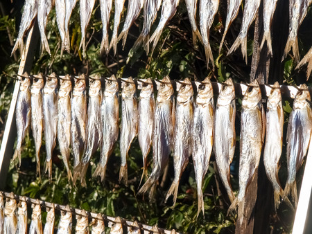 Lake Como, Italy. Typical fish named misultin dried in the sun Zdjęcie Seryjne - 36834778