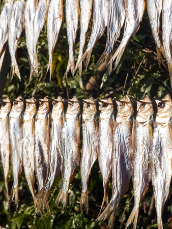 Lake Como, Italy. Typical fish named misultin dried in the sun Zdjęcie Seryjne - 44554827