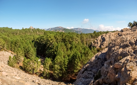 corse: Corse - Corsica, France: road of the forest of hospital Stock Photo