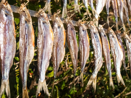 Lake Como, Italy. Typical fish named misultin dried in the sun Zdjęcie Seryjne - 65664748