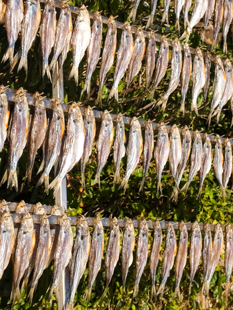 Lake Como, Italy. Typical fish named misultin dried in the sun Zdjęcie Seryjne - 71610930
