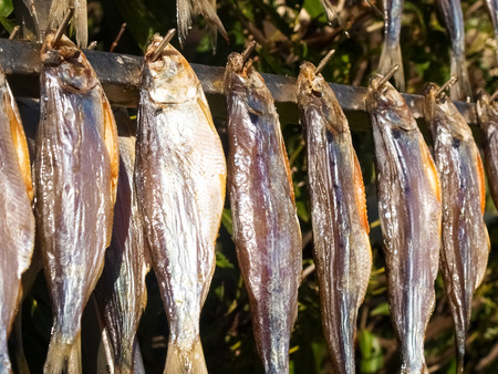 Lake Como, Italy. Typical fish named misultin dried in the sun Zdjęcie Seryjne - 73244194