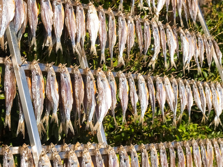 Lake Como, Italy. Typical fish named misultin dried in the sun Zdjęcie Seryjne - 73043476