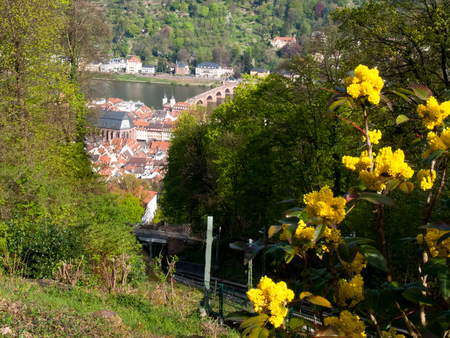 Heidelberg, Germany: City view from the KÃÆÃ,¶nigstuhl 80 meters above the valley floor on the north side