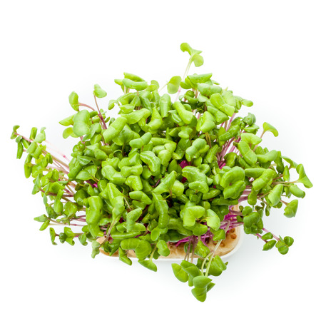 Cress with chili flavor and spicy note Stock Photo