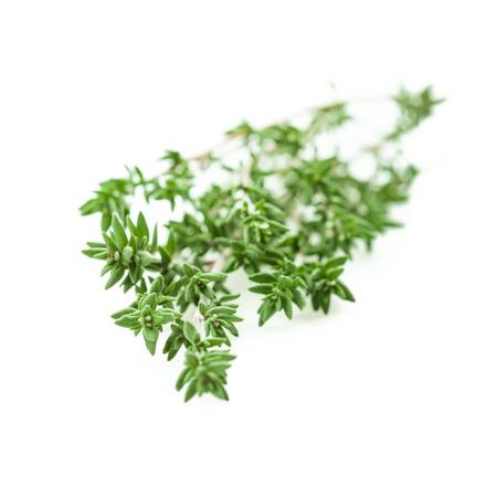 Fresh thyme bundled on a background