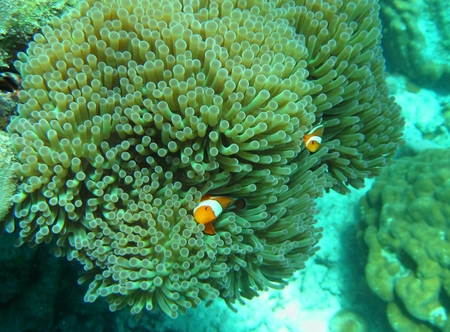 sky dive: The Nemo Cartoon Fish in underwater by Snorkeling