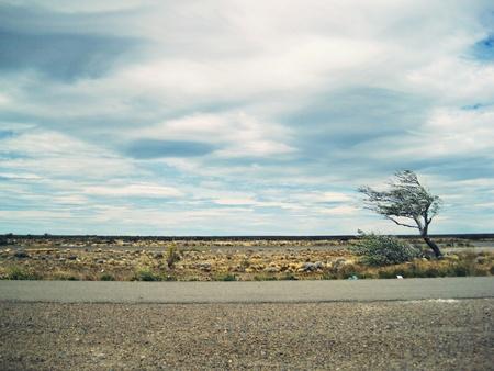 viento soplando: Viento patag�nico