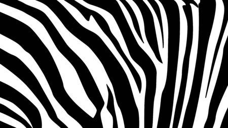 Un détail en noir et blanc de peau de zèbre