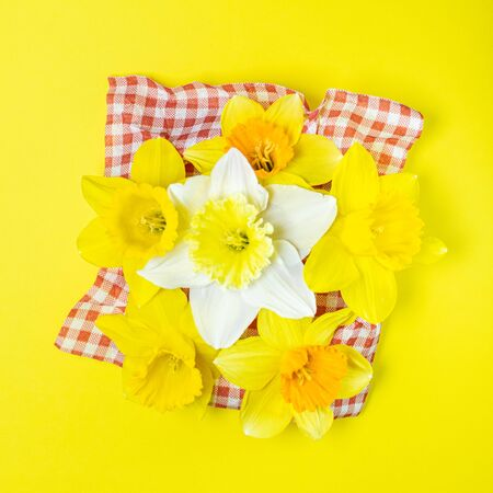 The traditional daffodil flower may be a showy yellow or white, with six petals and a trumpet-shape central corona. Here on bright yellow background in central composition