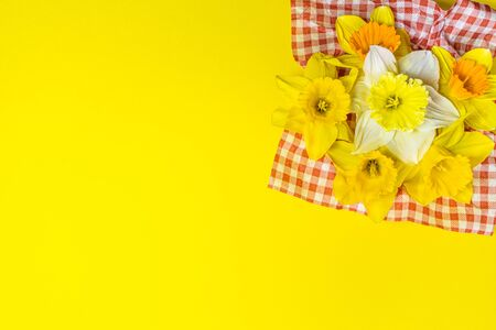 The traditional daffodil flower may be a showy yellow or white, with six petals and a trumpet-shape central corona. Here on bright yellow background in side composition