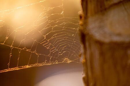 Spider web by the three in golden hour sunsine, setting sun time, damaged spiders web in sunlight