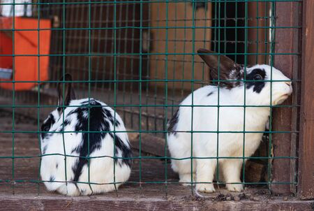Cute funny rabbits in a cage closeup. domestic fluffy pets. animal protection. Zdjęcie Seryjne