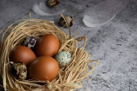 Chicken eggs in a nest of hay close-up on a light concrete background. Copy space. Agriculture