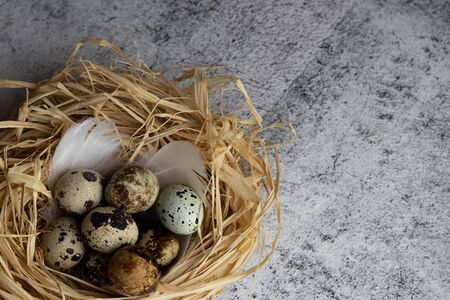a group of quail eggs lies in a nest of straw on light concrete. copy Reklamní fotografie