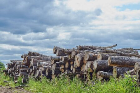 Closeup of felled and stacked tree trunks with a cut edge to the viewer. deforestation. enviroment protection. Reklamní fotografie